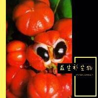 瓜拉纳提取物10% 食品级 保健原料 天然瓜拉那粉