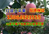 现在山东省苹果产地红富士苹果价格行情