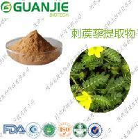 刺蒺藜提取物 uv 90% 抗衰老 壮阳 厂家生产