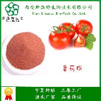 番茄粉  全水溶 无沉淀 果蔬粉  各种规格  斯诺特 大量出货