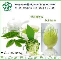 绿茶粉  绿茶生粉   斯诺特直销   水溶性  绿茶提取物