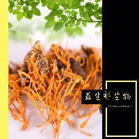 蛹虫草多糖30% 蛹虫草浸膏 蛹虫草酵素 供应包邮