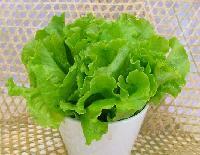 新鲜食材供应商农产品一站式采购配送食堂服务--生菜