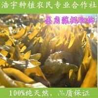 墨角藻提取物厂家