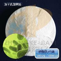 乳酸菌冻干粉 100亿/g 益生菌菌种 食品添加剂 嗜酸乳杆菌