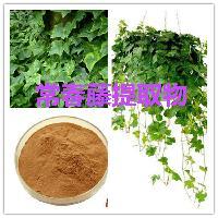 常春藤提取物  常春藤浸膏粉 常春藤酵素 常春藤速溶粉
