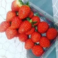 水果PPC塑料盒装封口气调包装机