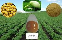 大豆多肽  大豆低聚肽98%   大豆肽粉     厂家直销