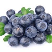 蓝莓花青素25%  蓝莓提取物 蓝莓粉