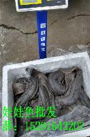 龙争虎斗娃娃鱼价格多少钱一斤批发