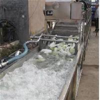 诸城全自动气泡清洗机  油菜翻浪式不锈钢清洗机