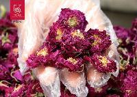 365朵玫瑰平阴玫瑰花蕊王源头厂家产地直销