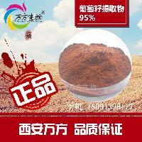 西安万方生物 葡萄籽粉提取物95%原花青素 直销包邮