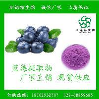 蓝莓提取物10:1 蓝莓粉 蓝莓浸膏液 包邮