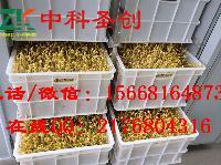 100斤豆芽机多少钱一台