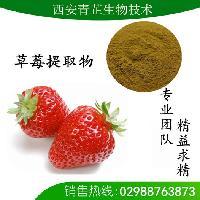 草莓粉|草莓速溶粉|草莓提取物