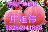 优质山东红富士苹果价格动态