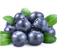 蓝莓粉 蓝莓酵素粉