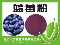 天然蓝莓粉   无添加  厂家供应