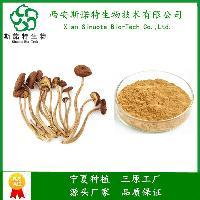 茶树菇提取物 10:1茶树菇粉 西安斯诺特  多年植提 研发生产一体