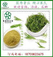 竹叶黄酮10% 天然淡竹叶提取物     新资源食品原料
