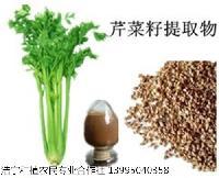芹菜籽提取物  芹菜子粉 芹菜籽粉 量大从优