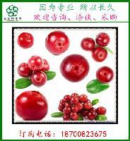 蔓越莓果粉   蔓越莓速溶粉   天然果粉   斯诺特生物