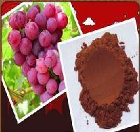 葡萄籽提取物 花青素 专业生产厂家 兰州现货包邮