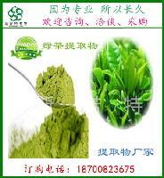 绿茶提取物 10:1 茶叶提取物 茶多酚 山绿茶提取物 保证溶解性好