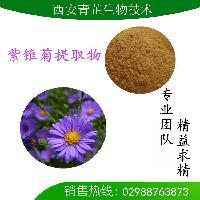 紫锥菊提取物 紫锥菊多酚 菊苣酸 紫锥菊粉