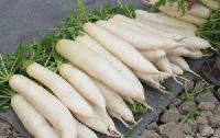 新鲜农产品宏鸿一站式食材食堂配送-白萝卜