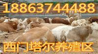 福建省莆田市内蒙古獭兔养殖场