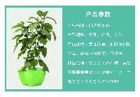 无土栽培蔬菜设备水培花卉 盆式4孔不带藤架种植花盆菜盆