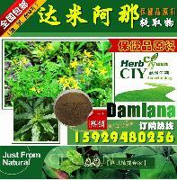 厂家直销:达米阿那提取物 10:1 达米阿那 现货供应