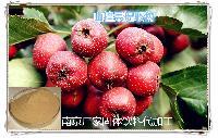 焦山楂提取物  山楂果粉 药食同源代加工厂家