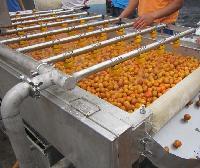 供应 橘子清洗机 金桔/砂糖橘/温橘气泡清洗机 全新报价