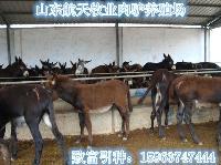 惠州市3个月毛驴公驴苗多少钱