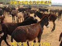 云南哪有毛驴养殖