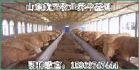 养牛视频养牛基地