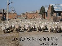 波尔山羊哪里有卖的