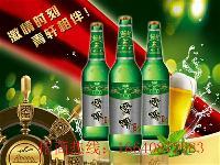 山东啤酒招商 500ml 330ml 瓶装 易拉罐啤酒