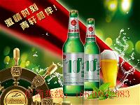 便宜10度500ml大绿瓶啤酒青岛青轩啤酒招商