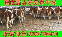 科学养牛西门塔尔牛小公牛批发价格多少