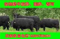 科学养牛一头小肉牛苗多少钱