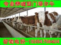 科学养牛西门塔尔牛崽价格多钱一头