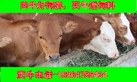 现在批发西门塔尔牛小牛价格多少免费教技术