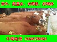 什么地方出售小肉牛价格怎样