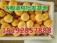 今年暖棚油桃产地价格 山东暖棚油桃价格行情
