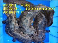 货真价实娃娃鱼多少钱一斤2018年批发娃娃鱼价格