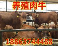 二岁母牛犊多少钱一只